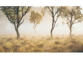 地球,雾,自然,草,树,壁纸,图片