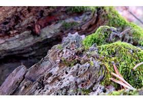 地球,苔藓,自然,树皮,壁纸,图片
