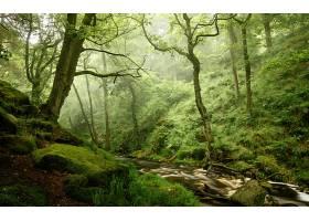 地球,溪流,自然,森林,树,温室,壁纸,图片