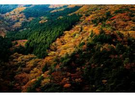 地球,森林,自然,日本,秋天,壁纸,图片