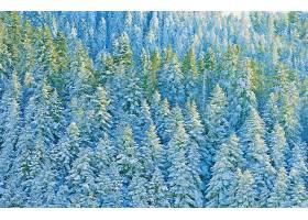 地球,森林,自然,树,冬天的,壁纸,(1)图片