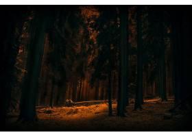 地球,森林,自然,树,冬天的,黑暗,壁纸,图片