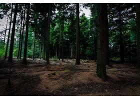 地球,森林,自然,树,壁纸,(2)图片