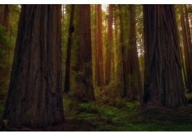 地球,森林,自然,树,壁纸,图片