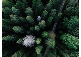 地球,森林,自然,树,天线,泥土,路,壁纸,图片