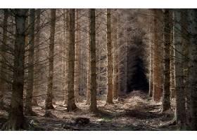 地球,森林,自然,树,小路,壁纸,(1)图片