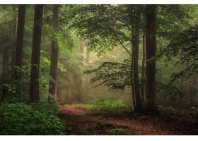 地球,森林,自然,树,小路,壁纸,(2)图片