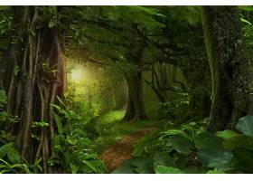 地球,森林,自然,树,小路,壁纸,(3)图片