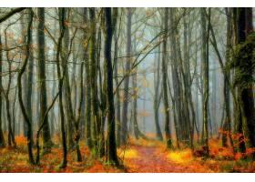 地球,森林,自然,树,小路,雾,壁纸,(1)图片