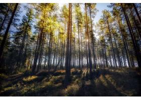 地球,森林,自然,树,快活的,壁纸,(1)图片