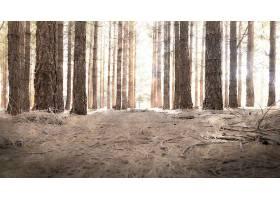 地球,森林,自然,树,快活的,壁纸,(2)图片