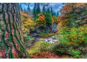 地球,森林,溪流,秋天,叶子,树,瑞士,壁纸,图片