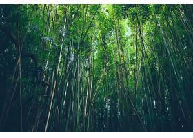 地球,竹子,自然,森林,壁纸,图片