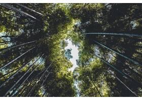 地球,竹子,自然,森林,植物,壁纸,图片