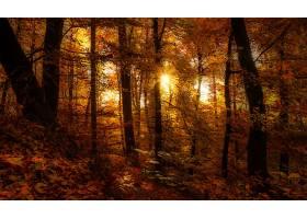 地球,森林,自然,树,秋天,叶子,壁纸,图片