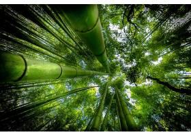 地球,竹子,自然,森林,绿色的,壁纸,图片