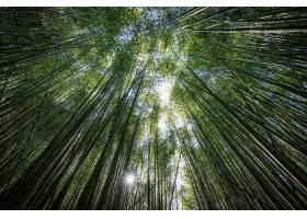 地球,竹子,自然,温室,壁纸,(3)图片