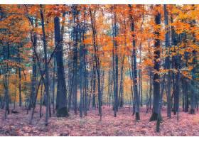 地球,森林,自然,树,秋天,壁纸,(2)图片