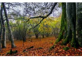 地球,森林,自然,树,秋天,壁纸,(6)图片