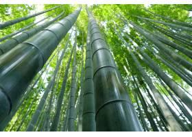 地球,竹子,自然,温室,壁纸,图片