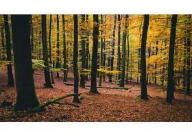 地球,森林,自然,树,秋天,壁纸,(7)图片