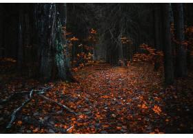 地球,森林,秋天,叶子,树,自然,小路,壁纸,图片