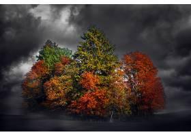 地球,森林,自然,树,秋天,壁纸,图片