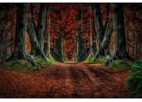 地球,森林,自然,树,秋天,泥土,路,壁纸,图片