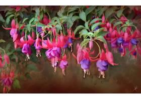 地球,紫红色,花,紫色,花,艺术的,自然,花,壁纸,