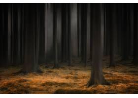 地球,森林,自然,树,艺术的,壁纸,图片