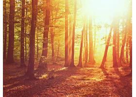 地球,森林,自然,树,阳光,壁纸,(1)图片