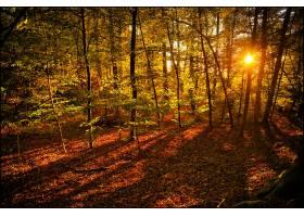 地球,森林,自然,树,阳光,壁纸,(2)图片