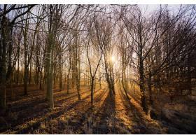 地球,森林,自然,树,阳光,壁纸,(3)图片