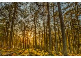 地球,森林,自然,树,阳光,壁纸,(4)图片
