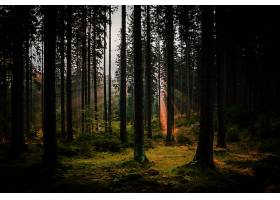 地球,森林,自然,树,阳光,壁纸,(5)图片