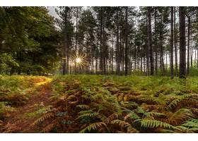 地球,森林,自然,树,阳光,蕨,小路,壁纸,图片