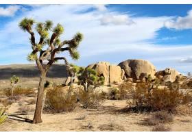 地球,约书亚,树,国家的,公园,国家的,公园,沙漠,岩石,美国,加利福
