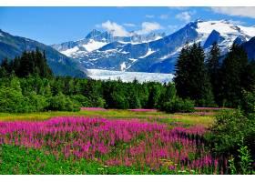 地球,山,山脉,紫色,花,自然,花,风景,草地,壁纸,图片