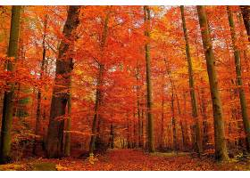 地球,森林,秋天,橙色的,叶子,壁纸,图片