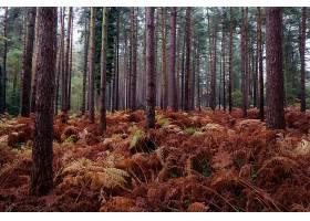 地球,森林,秋天,自然,树,蕨,壁纸,图片