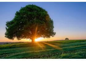 地球,树,树,寂寞的,树,自然,阳光,日出,壁纸,图片