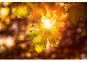 地球,叶子,Bokeh,快活的,自然,壁纸,图片