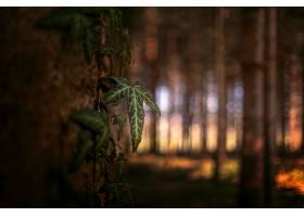 地球,叶子,自然,Bokeh,森林,壁纸,图片