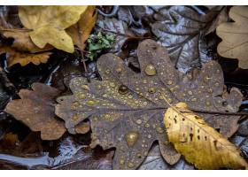 地球,叶子,自然,水,滴,壁纸,图片