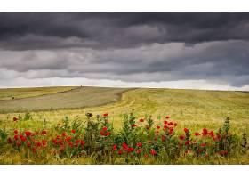 地球,领域,自然,夏天,罂粟,红色,花,风景,云,壁纸,