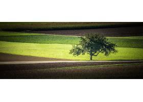 地球,领域,自然,树,壁纸,图片