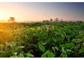 地球,领域,雾,晚上,植物,绿色的,自然,壁纸,图片