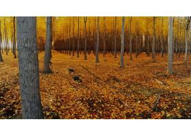 地球,秋天,叶子,树,自然,森林,壁纸,图片