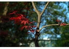 地球,秋天,叶子,树枝,壁纸,图片