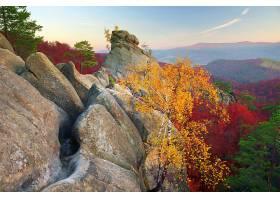 地球,秋天,叶子,树,森林,岩石,山,壁纸,图片